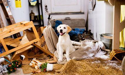 Desobediência e comportamento canino