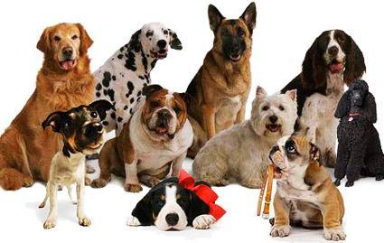 Conheça as qualidades específicas de todas as raças caninas.