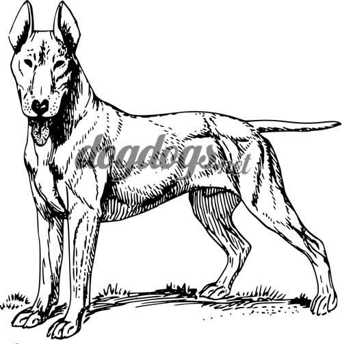 Colorir Desenhos De Cachorros De Raca