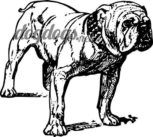 Desenhos de c es para colorir e pintar for Georgia bulldog coloring pages