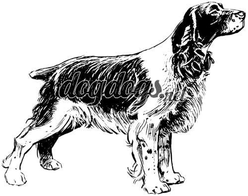 Desenhos De Cães Para Colorir E Pintar