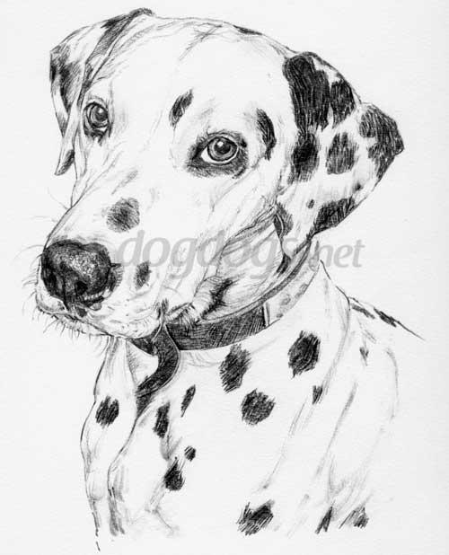 Desenhos Realistas De Cachorros Lapis De Grafite